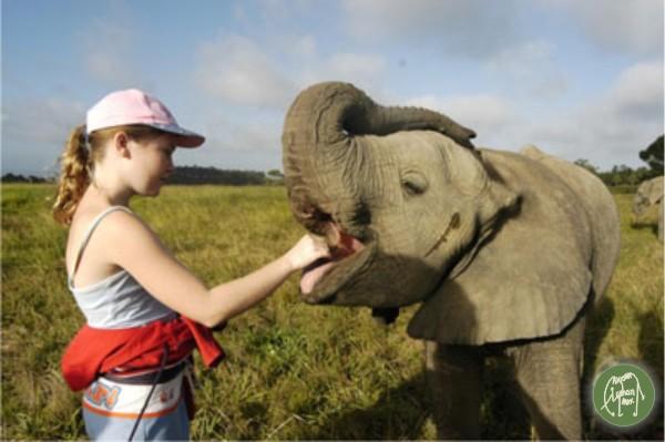 elephant 2 from Knysna ele park