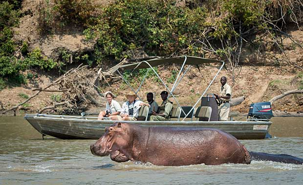 hippos at Nsefu Camp