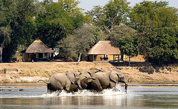 Elephants at Nsefu