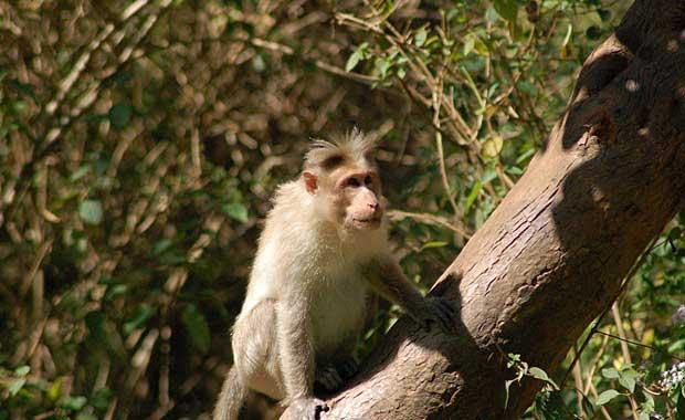 Coffee Plantation trek monkey