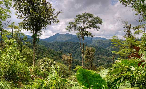 Cloud forest view