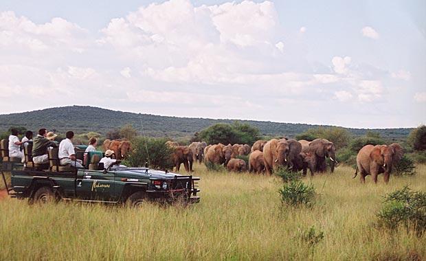 Madikwe Game Drive - Elephant herd
