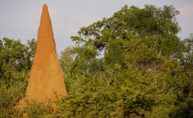 termite-mound