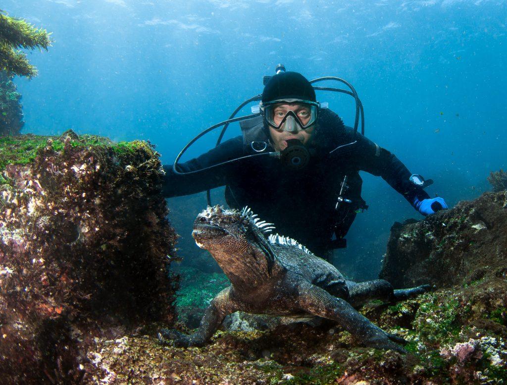 Scuba diver meets a marine iguana, Galapagos Islands, Ecuador