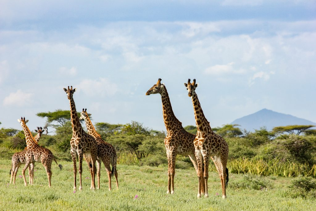 Wildlife viewing with The Highlands, Ngorongoror Crater, Tanzania